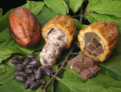 CacaoToChocolate